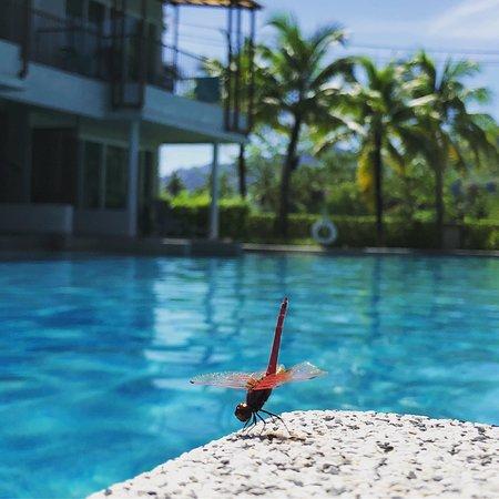 The Waters Khao Lak by Katathani-bild