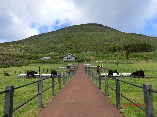 Mt.Nishi