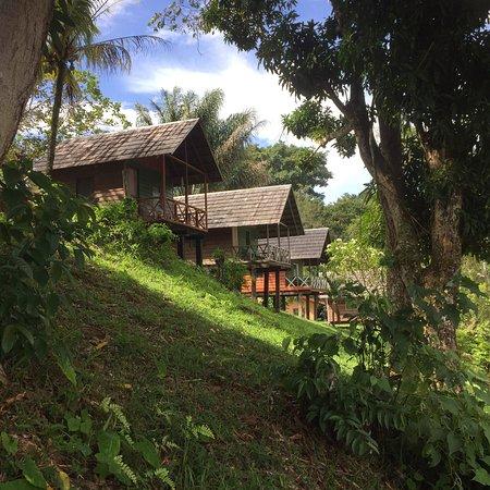 Sipaliwini District, Suriname: photo0.jpg