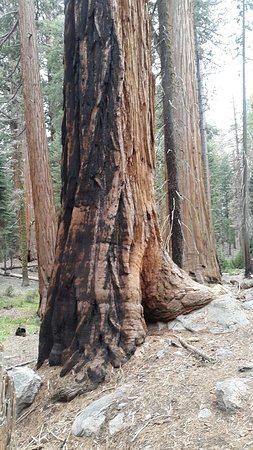 Sequoia and Kings Canyon National Parks ภาพถ่าย