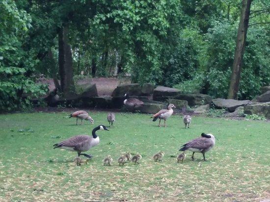 Mediapark Köln: Hewan di taman