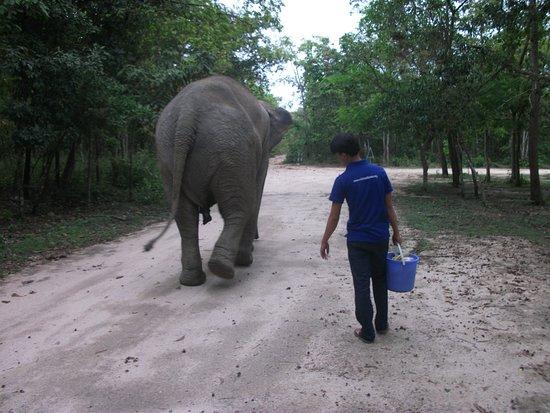 Phnom Tamao Wildlife Rescue Center: Taking Lucy for a walk