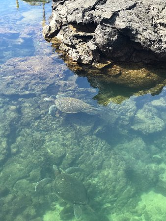 Los Tuneles: sea turtle in the crystal clear waters such a serene place!