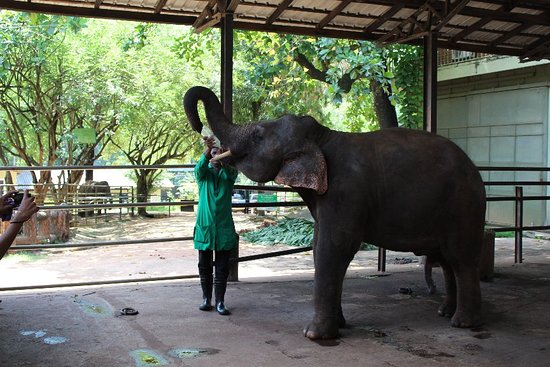 Pinnawala Elephant Orphanage Resmi