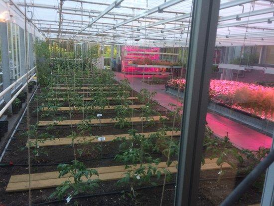De Kas: Part of their garden in house