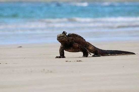5-Day All Inclusive Galapagos Island...