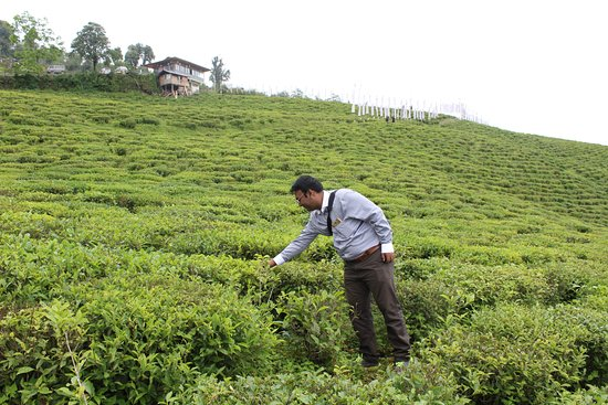 写真Temi Tea Garden枚