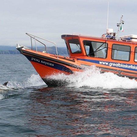 Dingle Bay Speed Boat Tours & Great Blasket Island Experience: The Great Blasket island Experience