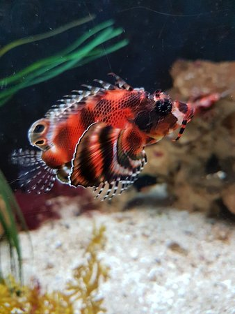 写真Grand Aquarium枚