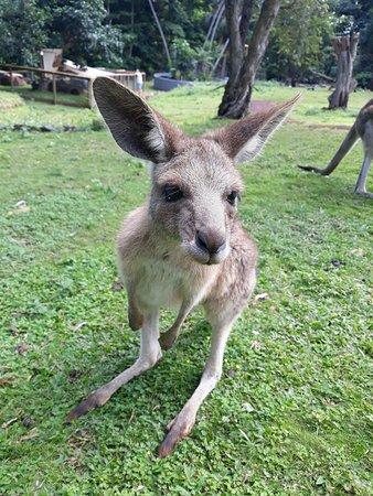 Cooberrie Park Wildlife Sanctuary Photo