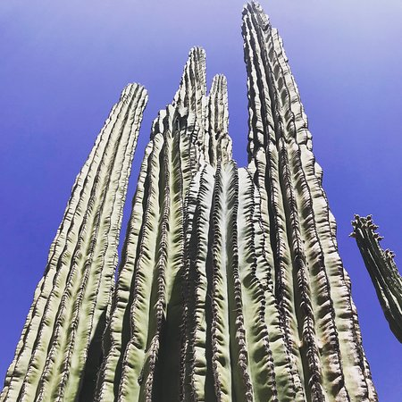 沙漠植物园照片
