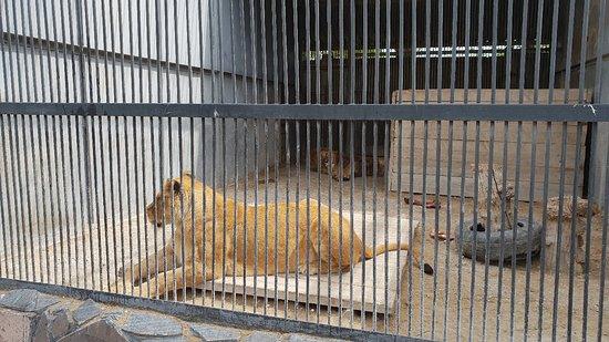 Foto de Karaganda State Zoo