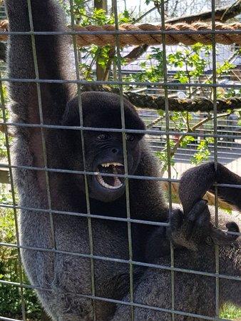 The Monkey Sanctuary Photo