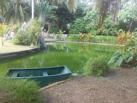 La Diguoise Guesthouse : Petit lac au fond du jardin: poissons et tortues