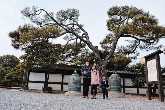 Castello Nijo: matsu trees