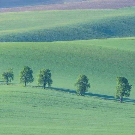 Moravia, República Checa: деревца