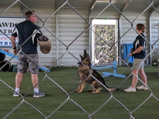 Lawdogs Australia: IMG_20180530_113431_large.jpg