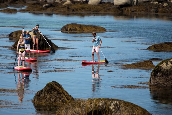 Kerlouan, France: Crossing Seaweeds fields on Paddleboard during big tides