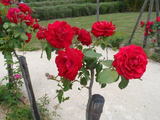 Parc du Petit Prince: Roseraie