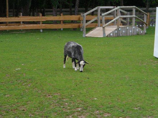 Ungersheim, Франция: Enclos des chèvres