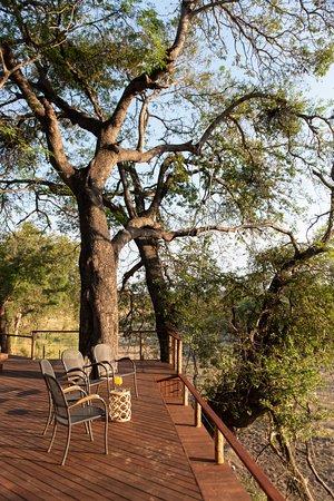 Nyala Safaris: Deck with big scotia