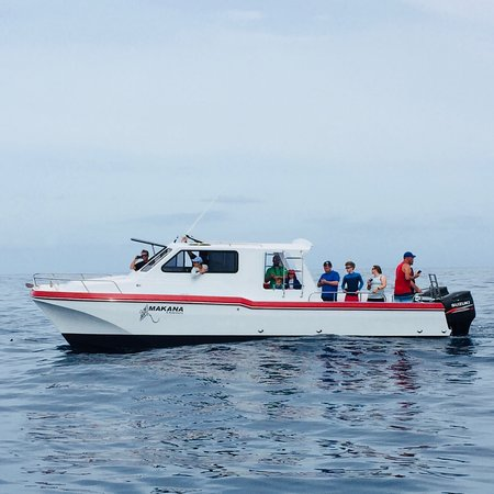 Makana Charters and Tours: Private charters at the NaPali Coast.  Smaller groups up 6 pax and up 12 pax.