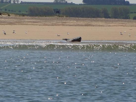 Bishop's Boats: Blakeney seals