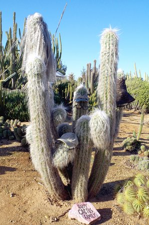 Cactus Country - May 2018 - Not sure if it was Cousin 'IT' or ZZ Top.