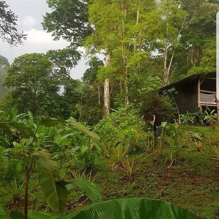 Rio Agujitas Eco Farm: Jungle heaven