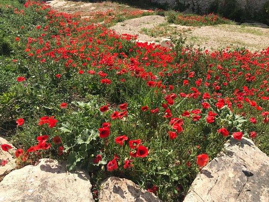Monterosso Almo, Italy: paesaggio 5
