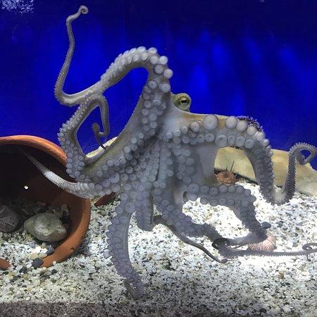 Aquaworld Aquarium & Reptile Rescue Centre Photo
