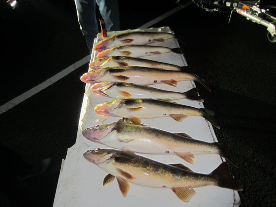 Ogdensburg, Nova York: Just a short few hours of fishing walleye with Jerry's Outfitters.