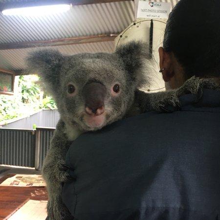 Kuranda Koala Gardens照片