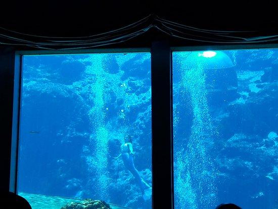 Weeki Wachee Springs: Underwater Mermaid Show 1
