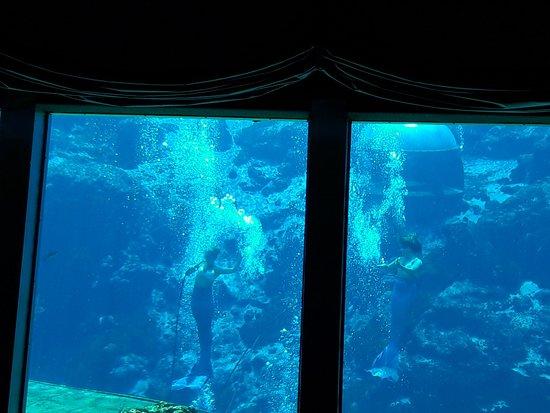 Weeki Wachee Springs: Mermaids Show
