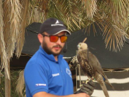 Dubai Safaris Tour: Hawk Demonstrator