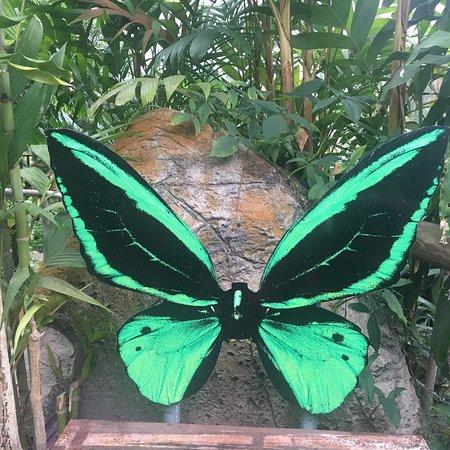 Australian Butterfly Sanctuary照片
