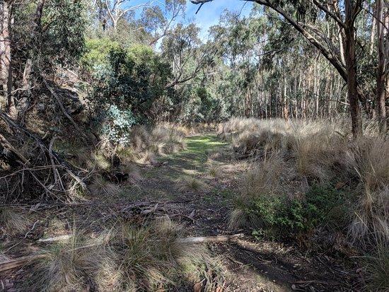 Anakie, Australia: IMG_20180531_112813_large.jpg