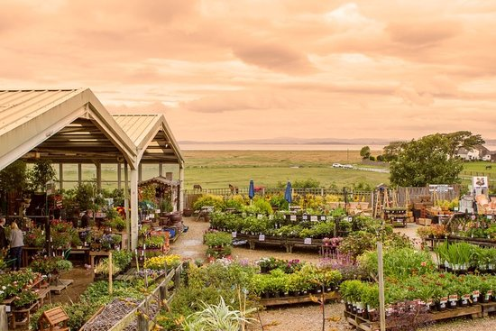Bolton le Sands, UK: Sunset from Bay View Garden Centre & Allium Eatery