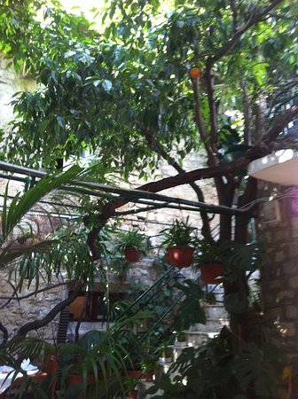 Restaurant Palace Paladini: Garden of the Wild Oranges