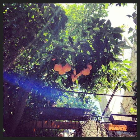 Restaurant Palace Paladini: Lucky Wild Orange - if it falls on You, will be blessed by pure luck