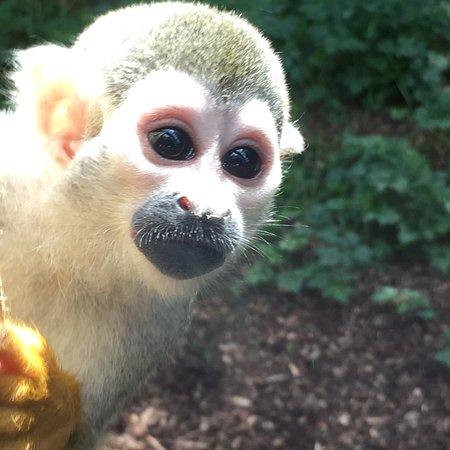 South Lakes Safari Zoo ภาพถ่าย