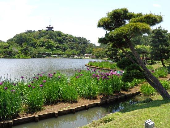 Sankeien Gardens: urokliwa sosna