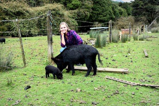 Stu's Wild Pig Farm: mom and baby