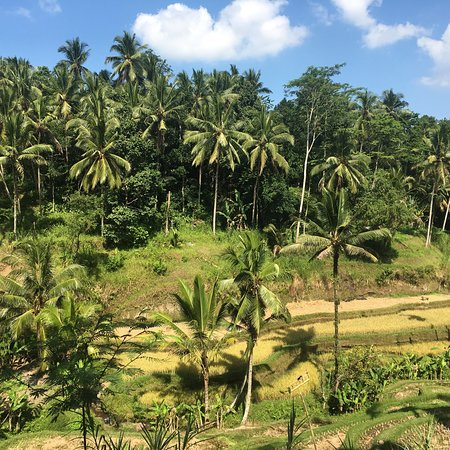 Tegalalang Rice Terrace: Amazing rice field
