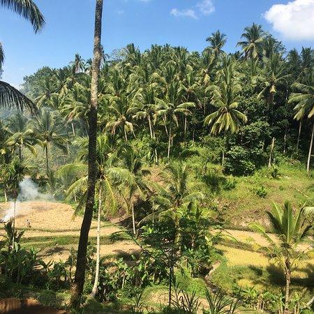 Tegalalang Rice Terrace ภาพถ่าย