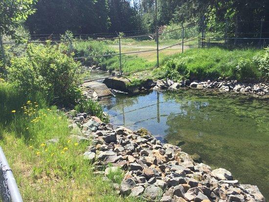 Agassiz, Canada: Adult fish entranceway to hatchery.