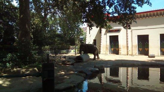 Antwerp Zoo (Dierentuin) Fotografie