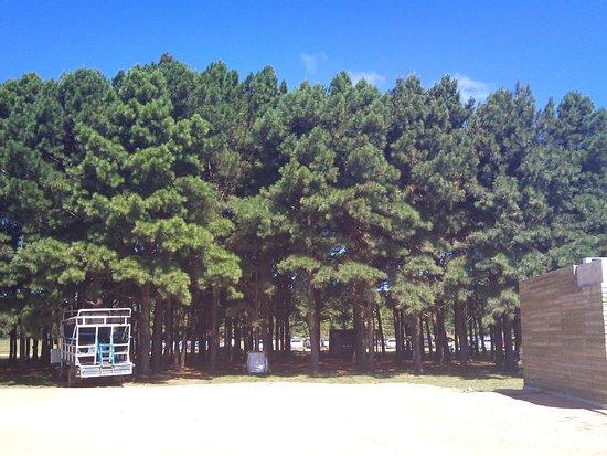 Parque Nacional de Cabo Polonio: Tree Canopy