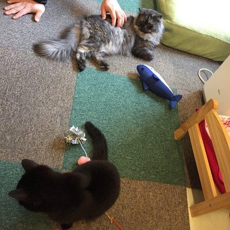 Cat Cafe Nyanny照片